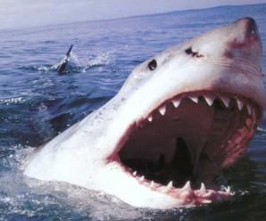 Акулы-ы-ы-ы! Опасность! 9 фото.
