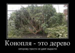 funium_ru_123456 (95)
