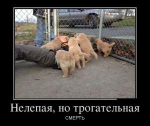 funium_ru_demotivatory-prikoly-61 (128)