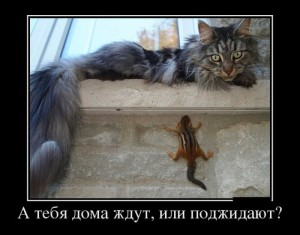 funium_ru_www_k (9)