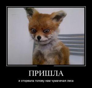 funium_ru_www_k (94)
