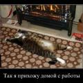 Прикольные картинки, ржака-ржака-ржака (35 шт).