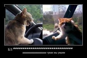 funium_ru_100000000 (85)