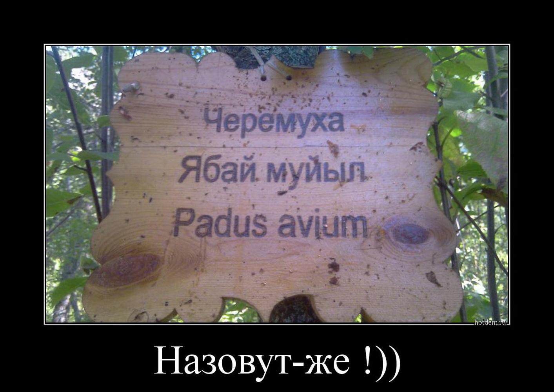 funium_ru_p-o-i-y (16)