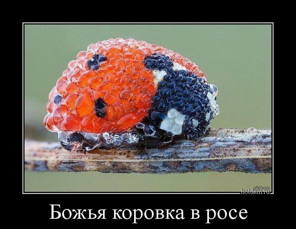 funium_ru_p-o-i-y (27)