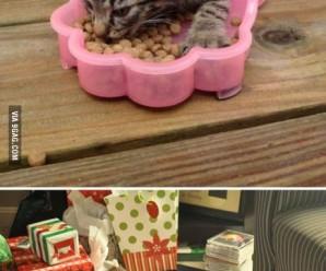 котоматрица — смешные кошки !