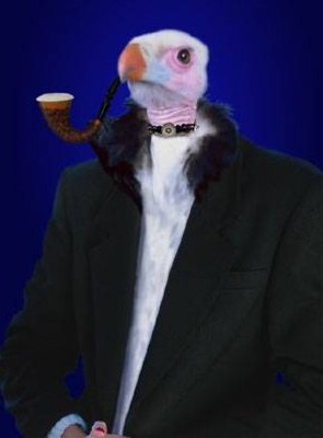 birdGentleman