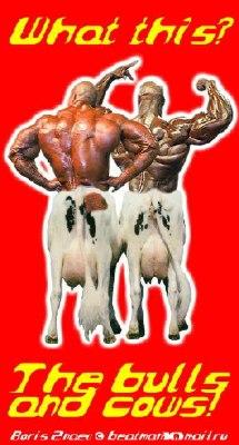 bullsNCows
