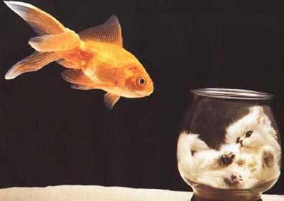 catForFish