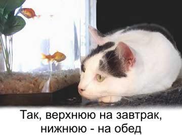 catNFish