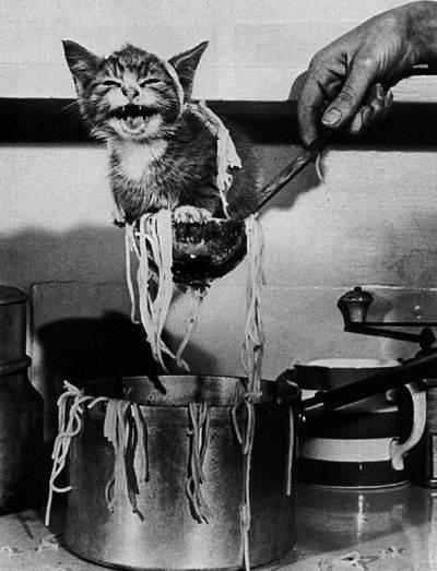 catSpagetti