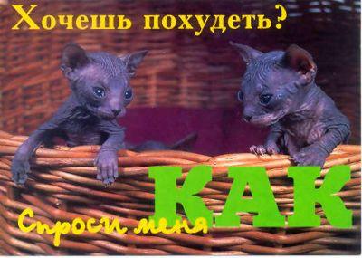catWantPohudet