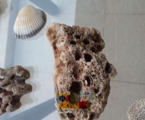 Ракушки и кораллы из Южно-китайского моря фото