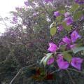 Дикие цветущие растения в Китае фото