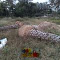 Корни пальмы фото