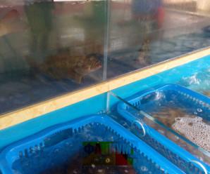 Китайский ресторан морепродуктов фото