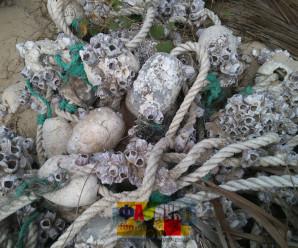 Морские полипы в Китае фото