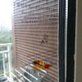 Есть ли в Китае комары?