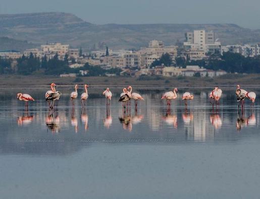 кипр фото туристов (7)