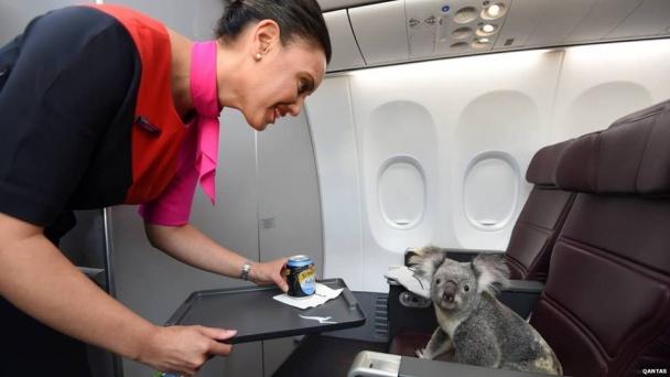 демотиваторы и приколы про полеты на самолете (4)