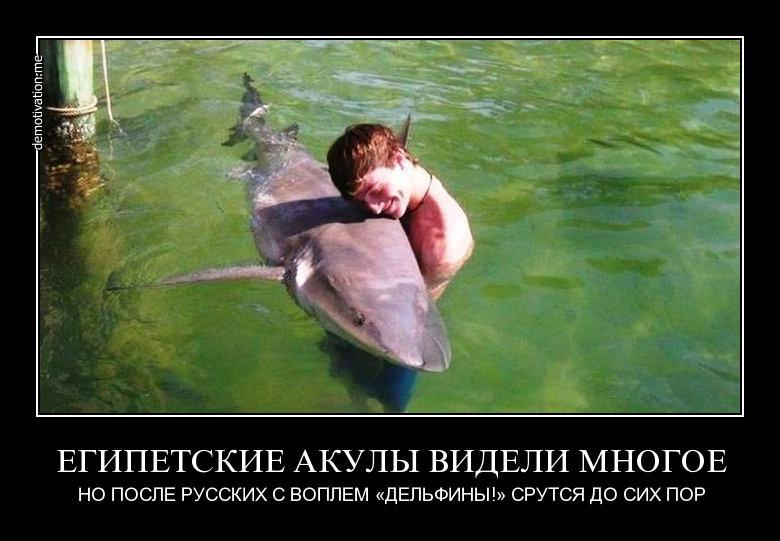 приколы про русских туристов (13)