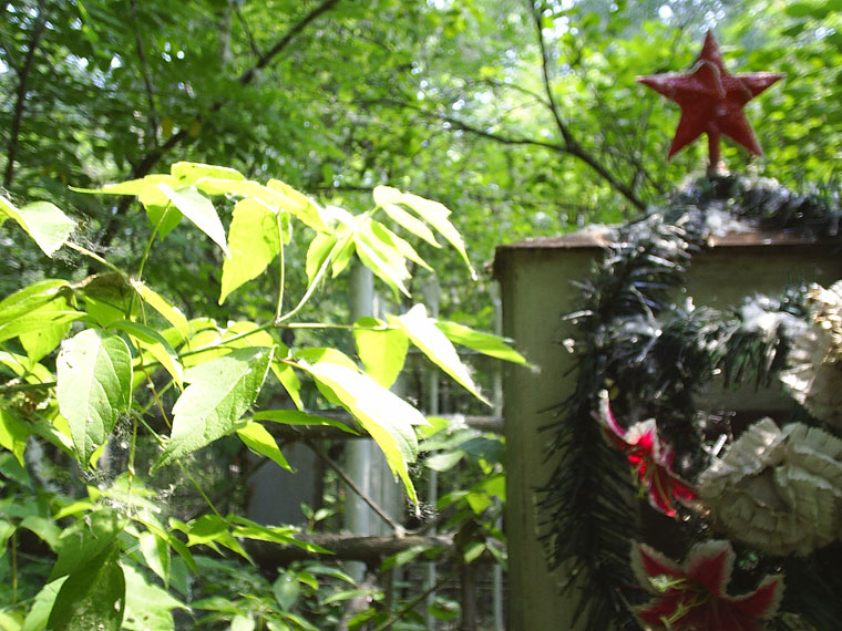 фото-кладбища-(14)