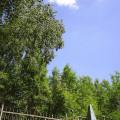 Интересные фото с кладбища