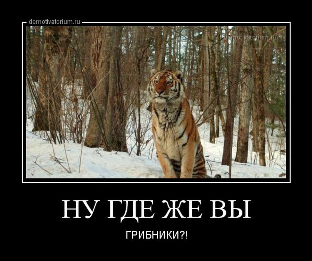 funium_ru-784512 (16)