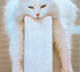Ржачные фото до слез про котов и других животных