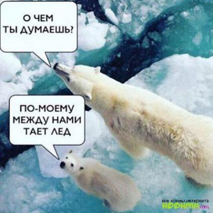 Грибы Тает Лёд Мем (1)