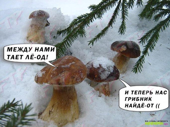Грибы Тает Лёд Мем (8)