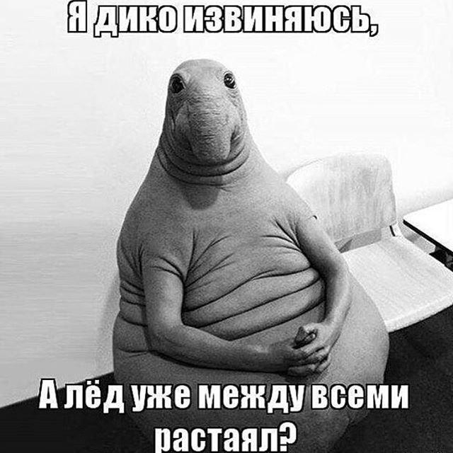 Грибы Тает Лёд Мем (9)