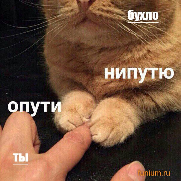 ОПУТИ-приколы