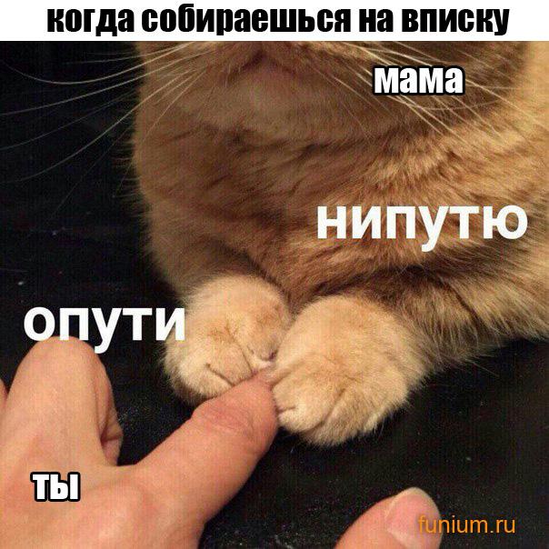 ОПУТИ_смешные_картинки