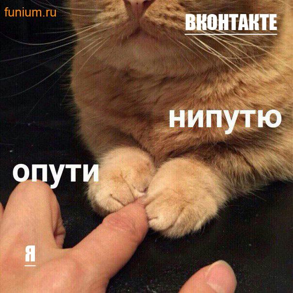 мем опути нипутю (1)
