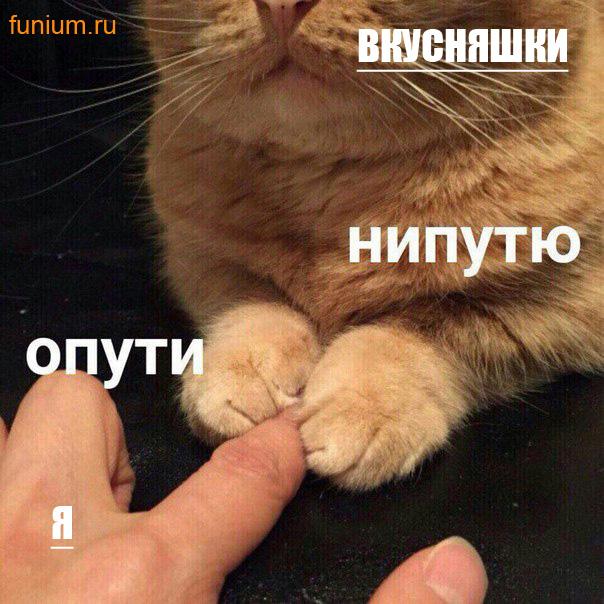 мем опути нипутю (5)