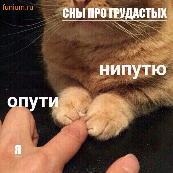 мем опути нипутю (6)