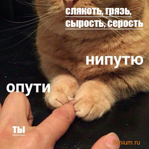 нипутю-мем