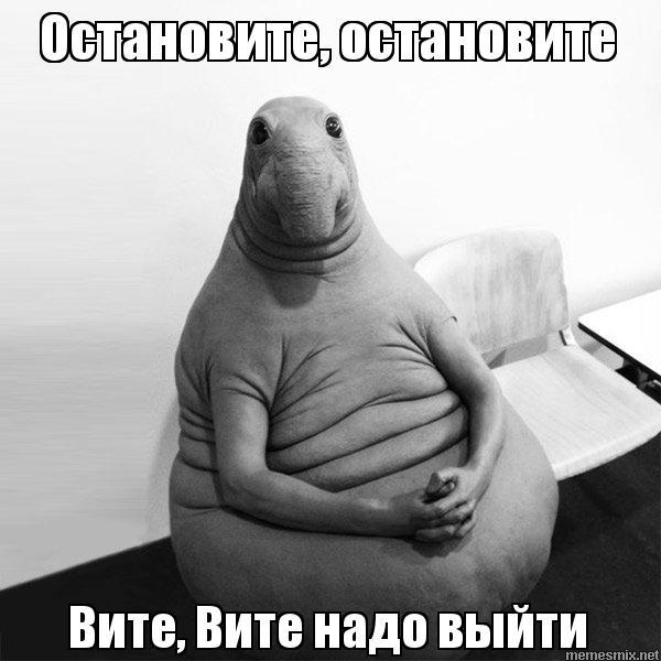 остановите вите надо выйти мем (11)