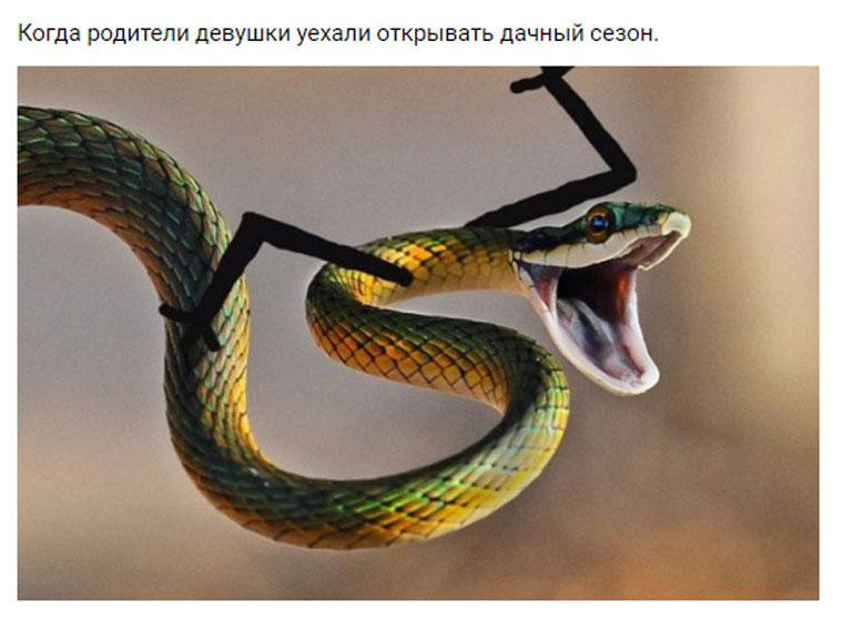приколы про змей с руками (10)