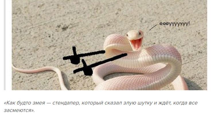 приколы про змей с руками (13)