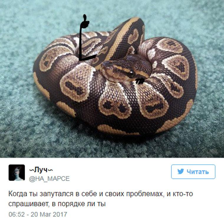 приколы про змей с руками (3)