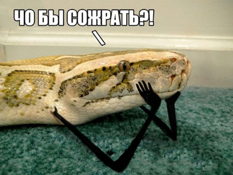 приколы про змей с руками (7)