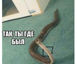 Новые мемы со змеями с руками — комиксы