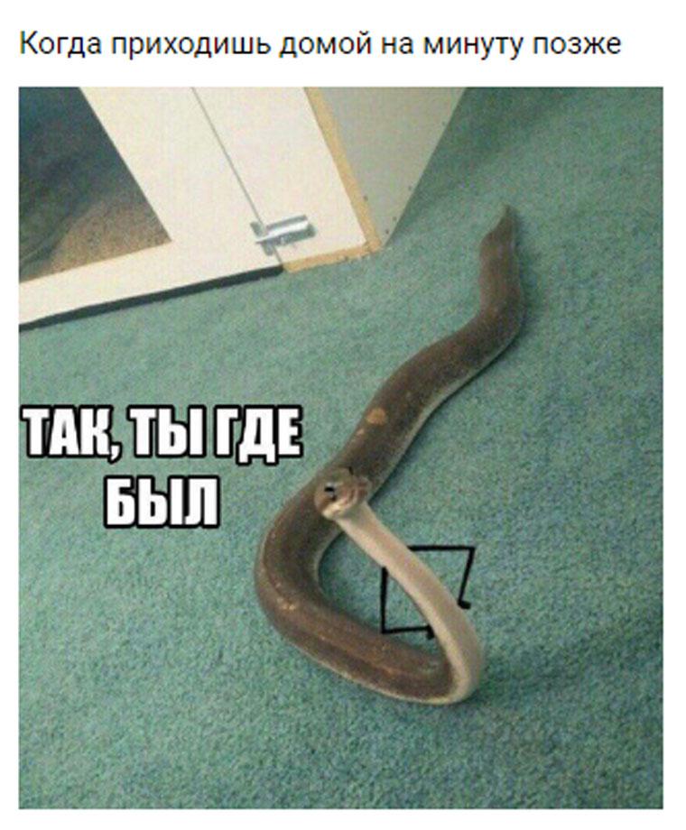 приколы про змей с руками (8)