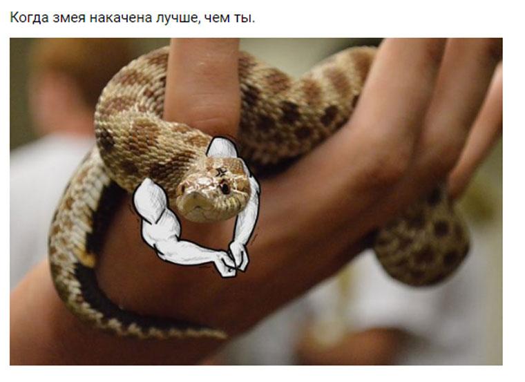 приколы про змей с руками (9)