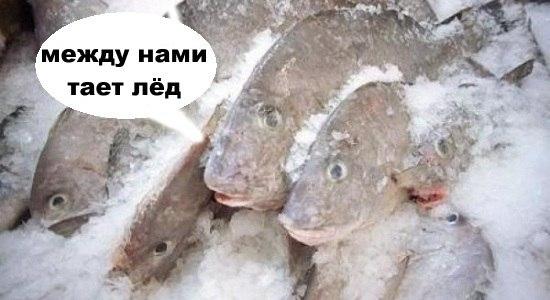 тает лед (1)