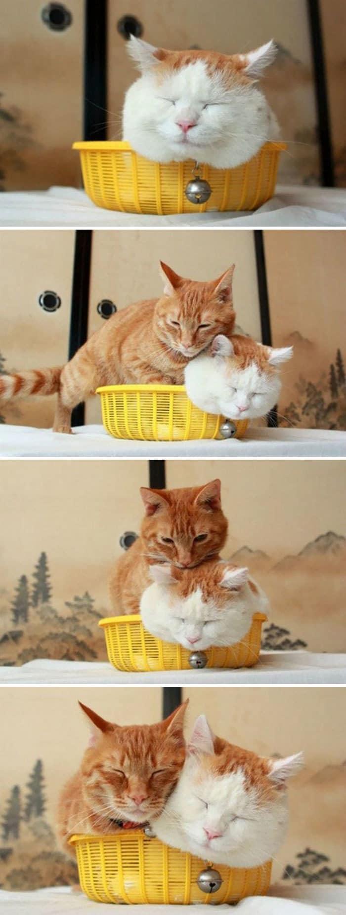 коты в маленьких коробках приколы (1)