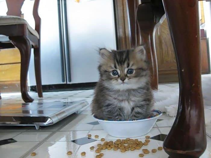 Прикол с маленькими котами