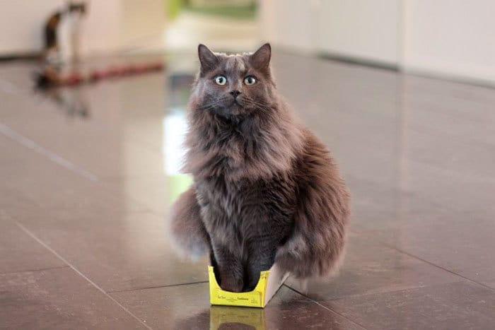 коты в маленьких коробках приколы (11)